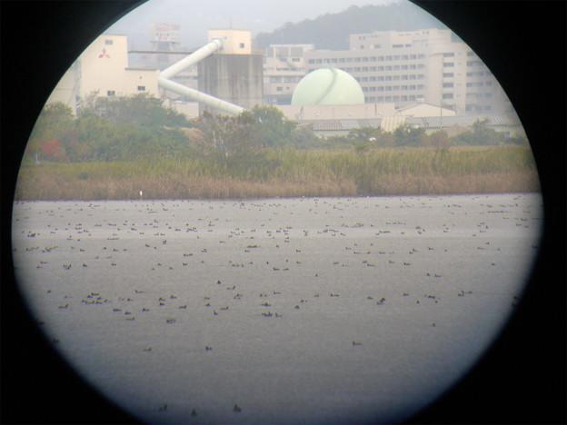 米子水鳥公園(4)