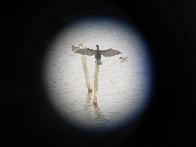 米子水鳥公園(7)