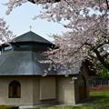 写真: 修道院的櫻花