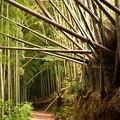 山間部の竹林
