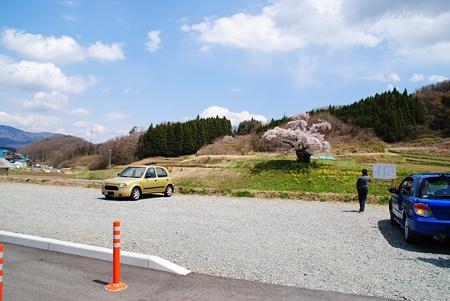 ozawanosakura6