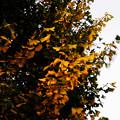 Photos: 秋風で揺さぶられ