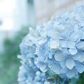 Photos: 白く青く