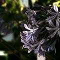 Photos: 暗がりで咲く