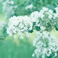 写真: 柔らかく白く