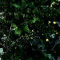 写真: 緑の世界で咲く