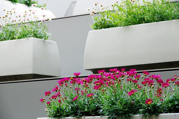 写真: 都会の花々