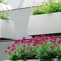 都会の花々