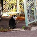 写真: 猫の集会場