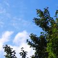 写真: 秋に一つ及ばず