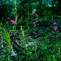 緑園で咲く花