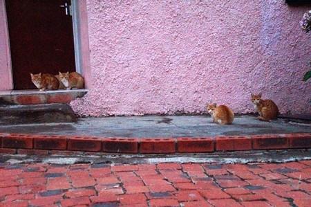 ゲストハウスの猫たち