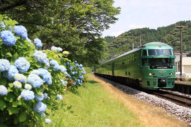 Photos: 紫陽花とゆふいんの森