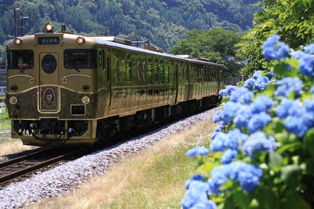 紫陽花とスイーツトレイン『或る列車』