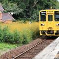 写真: 黄色と黄色