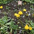 写真: 大宮花の丘公園04