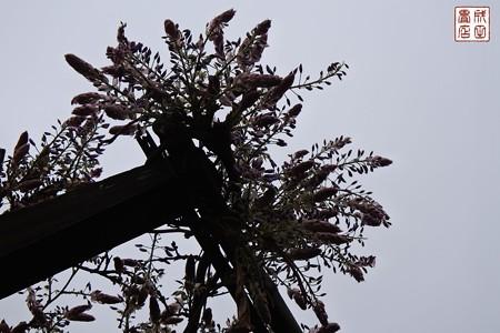 大宮花の丘公園09
