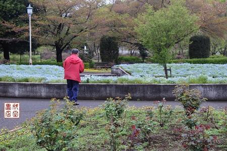 大宮花の丘公園13