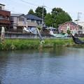 写真: 鯉のぼり04