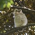 写真: フクロウ44