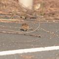 写真: 小鳥02