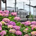 写真: 梅雨の花