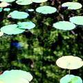 写真: 1)~蓮っ葉のテーマ曲だぜぇ~うへへ~(´-ω-`)