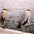 写真: 1)鷺鷺s~( ̄▽ ̄;)
