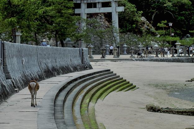 ~厳島神社境内(御笠浜)
