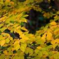 写真: 黄の窓