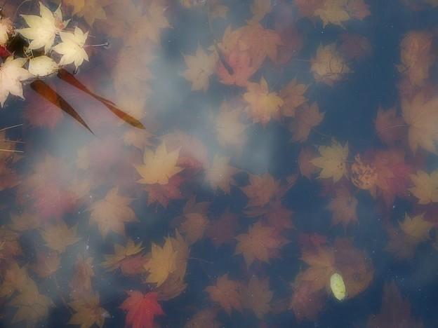 写真: 秋のゼリー