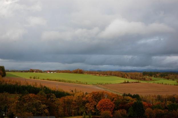 晩秋の丘2