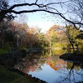 写真: 晩秋の池