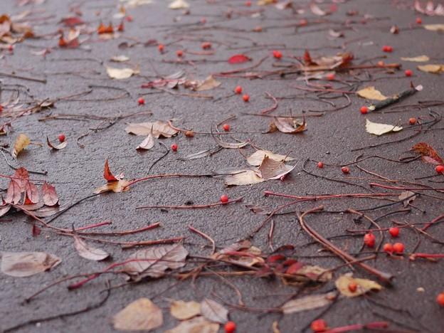 写真: 秋が落ちている