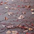 秋が落ちている