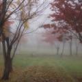 写真: 霧の朝1