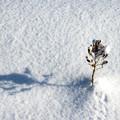 美瑛冬の美