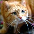写真: 庭猫a