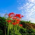 写真: 井手浦の秋