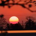 帰り道の夕陽