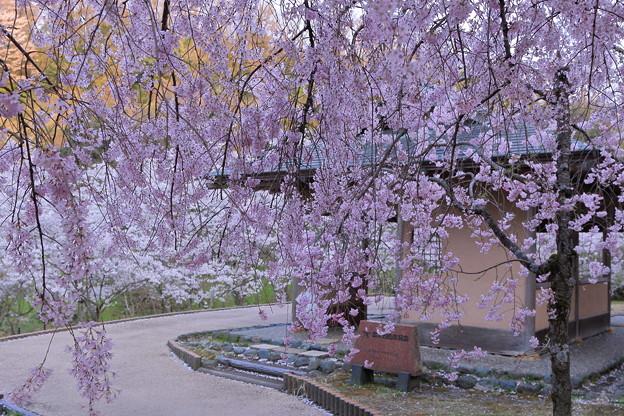 写真: 四百年の森(1)