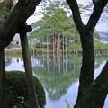 写真: モミジの木の間から 唐崎松