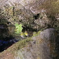 写真: メジロちゃんの行水?