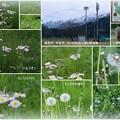 Photos: 黒部市宇奈月と入善町 墓ノ木自然公園から