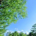 雨上がりの青空と新緑