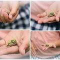 写真: 可愛いお手てに カエル コラージュ