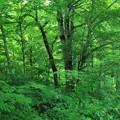 写真: 緑に包まれて