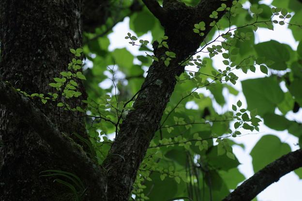 緑の木陰で