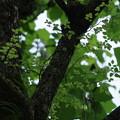 Photos: 緑の木陰で