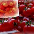 写真: ミニトマト